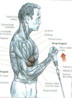 Flexão alternada dos cotovelos com polia baixa:  Em pé, em frente ao aparelho, a alça segurada em supinação:  - inspirar e realizar uma flexão dos cotovelos; expirar no final do movimento.  Este exercício permite localizar bem o esforço sobre o bíceps braquial e favorece uma intensa congestão do músculo.