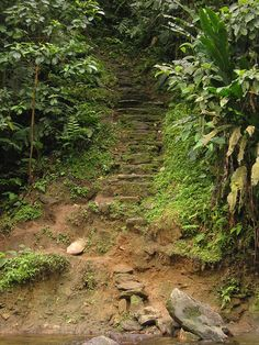 the stairway to the lost city. it rises right out of the riverbed