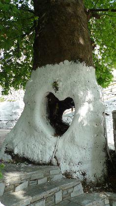 Lovely tree in Thassos