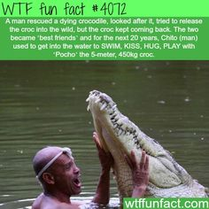 WTF Facts : funny, interesting & weird facts — The most amazing story about a man a crocodile -. Amor Animal, Mundo Animal, Wtf Fun Facts, Funny Facts, Random Facts, Crazy Facts, True Facts, The More You Know, Good To Know