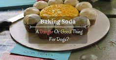 Baking Soda – Is It A Danger Or Good Thing For Dogs?