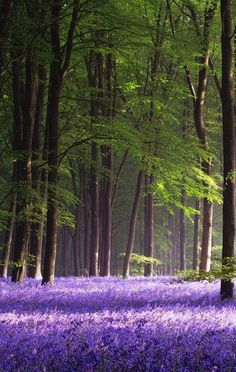 Micheldever Wood, Hampshire, England.