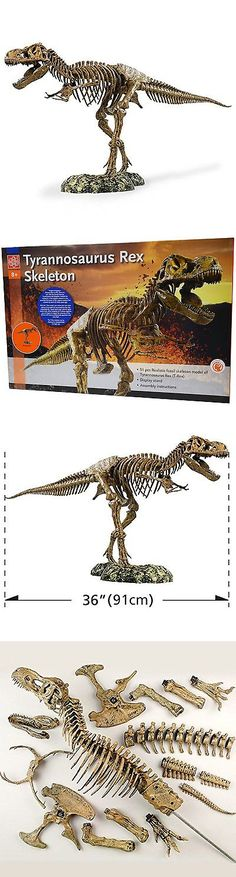 Animals and Nature 31744: Edu-Toys Science Tech T-Rex Skeleton 36 Scale Replica Model -> BUY IT NOW ONLY: $55.78 on eBay!
