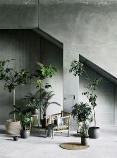 This is such a great space. I love how many plants there are within this living room. So many pretty trees, ferns, and great pots to make this place so cozy.