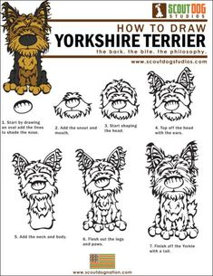 "How to Draw Yorkshire Terriers ""Yorkies""    Download the How to Draw Yorkies (PDF) #yorkshireterrier"