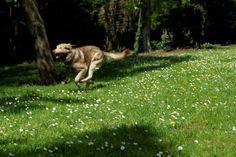 Morning exercise in my garden! juuuuuupppppiiiii wuff
