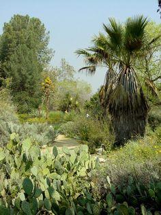 Rancho Santa Ana Botanic Garden, near the San Gabriel Mountains, Claremont, California