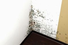 TU SALUD: Como eliminar el moho de tu casa sin tóxicos