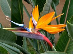 ♥GK♥ 97  NEPAL-20 Stunning Tropical Flowers From Around The World