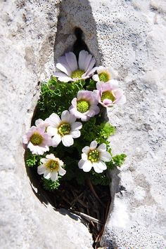 flowers growing out of a crack