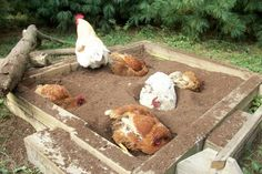 dust bath box for chickens - putting one in the coop for the winter