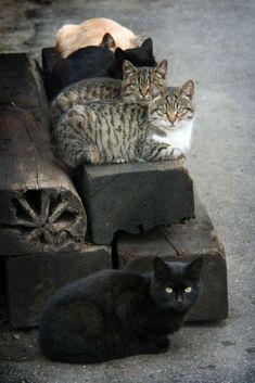 "coisasdetere: "" Gatos … """