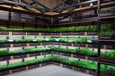 Albert Heijn XL Help-yourself Herb Garden by studiomfd, Amsterdam – Netherlands » Retail Design Blog