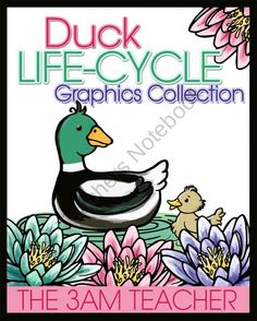 Duck Life-Cycle Graphics Collection from The 3AM Teacher Designs on TeachersNotebook.com (41 pages)  - A beautiful set of duck life-cycle graphics by The 3AM Teacher! $