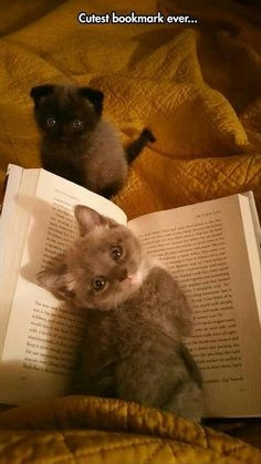 Book Lovers Bookmark Kittens --These two sweet kitties have to be the most adorable bookmark ever, wouldn't you agree?