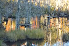 Evening Reflections in Beaver Pond. by Margaret Dent on 500px