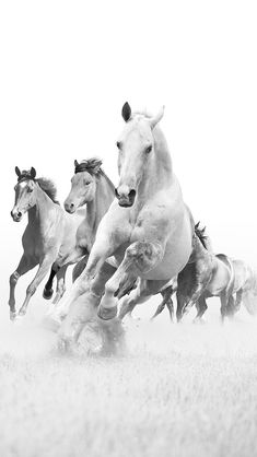 Love this . . . All The Pretty Horses, Beautiful Horses, Animals Beautiful, Farm Animals, Animals And Pets, Cute Animals, Horse Wallpaper, Photo Animaliere, Horse Posters