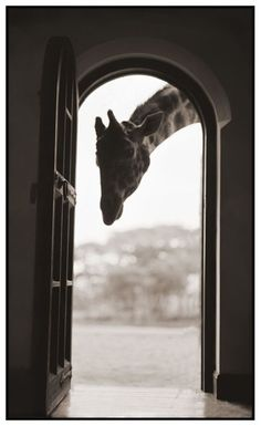 Nick Brandt...missed giraffe manor when I went, but did go to the sheldrake orphanage.