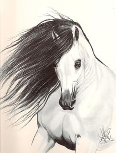 drawing of a horse - Betsy