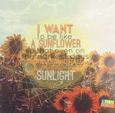 I want to be like a sunflower so that even on the darkest of days I will stand tall and find the light. sunflower quote