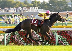 QUEENS RING (JPN) (Manhattan Cafe {Jpn}–Aqua Ring {Jpn}, by Anabaa) won a key prep for the G1 Queen Elizabeth II Cup in the G2 Fuchu Himba S. Oct. 15, and she followed up in the …
