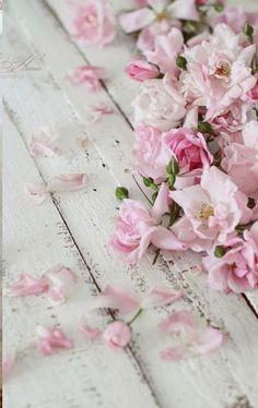 Pink flower petals on a wooden ground give a vintage touch #frühling #blüten #rosa #vintage