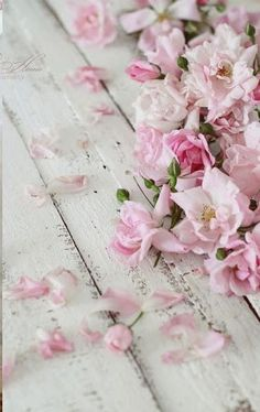 Pink flower petals on a wooden ground give a vintage touch #frühling #blüten #rosa #vintage