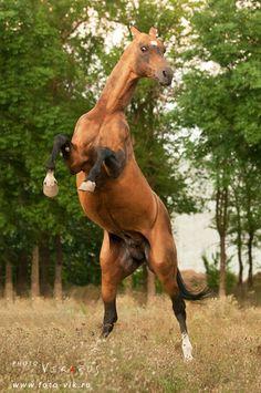 http://www.equestrian.ru/photos/user_photo/2010/fe3a8c15.jpg