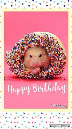 Happy Birthday Cute Birthday Wishes Happy Birthday Animals, Funny Happy Birthday Wishes, Happy Birthday Best Friend, Happy Birthday Pictures, Happy 2nd Birthday, Animal Birthday, 21 Birthday, Sister Birthday, Birthday Quotes