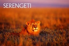Serengeti National Park poster