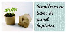 semilleros en tubos de papel higiénico