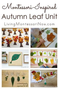 This Montessori-inspired autumn leaf unit is a roundup with a huge variety of leaf activities for toddlers through early elementary - Living Montessori Now