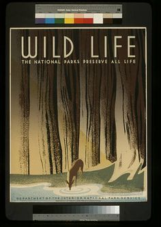 This is a WPA Federal Art Project poster for the National Park Service showing a deer drinking from a forest stream. The National Parks Preserve All Life vintage poster Poster Vintage, Vintage Travel Posters, Vintage Prints, Vintage Art, Vintage Style, Wpa Posters, Poster Prints, Retro Posters, Poster Ads