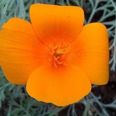 Последние теплые цвета осеннего солнца. Уже не греют, но глаз радуют#flowers#осень#sun#nature#dnepr#myland