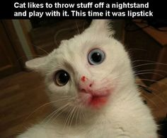 And Brains - LOLcats is the best place to find and submit funny cat memes and other silly cat materials to share with the world. We find the funny cats that make you LOL so that you don't have to. Funny Animal Images, Cute Funny Animals, Funny Animal Pictures, Animal Memes, Funny Cute, Cute Cats, Funny Photos, Crazy Pictures, Silly Cats