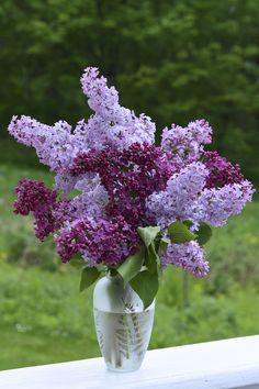 A simple vase of lilacs this week needs no further introduction. Thanks to Cathy at Rambling In the Garden, who hosts a weekly meme to showcase what is blooming in our ga… Lilac Bouquet, Lilac Flowers, Fresh Flowers, Spring Flowers, Beautiful Flowers, Flowers Bunch, Lilac Plant, Lilac Bushes, Decoration Plante