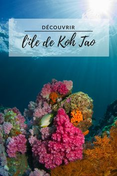 14 Skill Focused Travel Ideas For Thailand: Get Scuba Certified In Koh Tao Under The Water, Under The Sea, Aquarium Zen, Coral Reef Pictures, Ko Lipe, Underwater Pictures, Ocean Underwater, Underwater Animals, Beautiful Fish