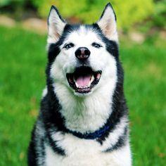 Welcher Hund passt zu mir? Mach den Test!