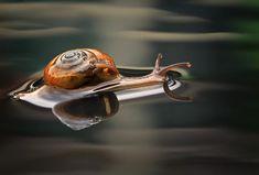 Amazing Macro Photography by Shikhei Goh | Cuded