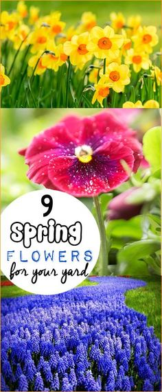 9 Spring Flowers for you Yard.  Beautiful flowers that bloom in the Spring.  Dazzle your outdoor spaces with these stunning flower choices.
