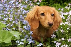 #Dachshunds love nature  Click on this image for more pinable pictures of #dogs and #puppies