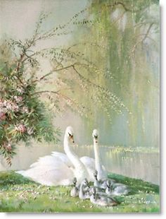 """Family in the Park"" by Vernon Ward, aka Vernon Beauvoir Ward Prolific English Painter & Commercial Artist known for his Works of Flowers & Birds . Swan Love, Beautiful Swan, Beautiful Birds, Animals Beautiful, Beautiful Family, Swan Pictures, Pretty Pictures, Animals And Pets, Cute Animals"