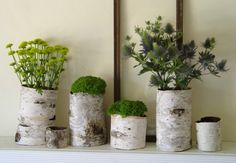 DIY! Upcycle old cans and bottles as stylish/rustic vases by wrapping them with found birch bark