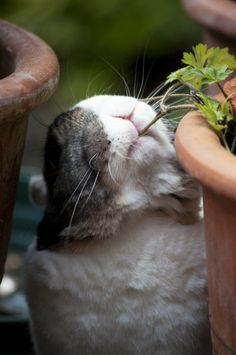 Bunny Nibbles on a Plant - January 20, 2011