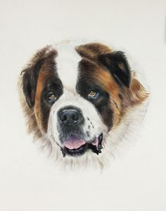 Art by Lesley Zoromski - Bud St. Bernard Color pencil/water  color paint commission