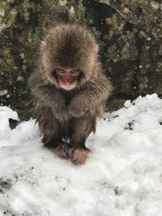 Baby Snow Monkey in Nagano Japan http://ift.tt/2lh7ccU