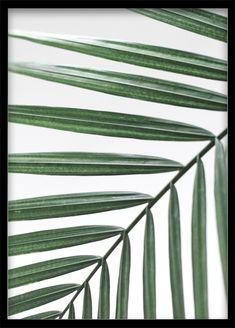 Palm Leaf Poster Palm Tree Print Palm Leaf Closeup Printable Poster Printable Wall Art Botanical Art Green and White Poster Palms Wall Art Palme Poster Palmen Blatt Print Ausdruckbares Poster Printable Poster Grünes Blatt Poster Botanik Plakat Closeup Pflanze Palme Fotografie