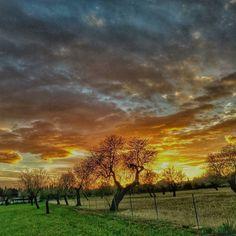 #binissalem #canostra #sacapavallada #world_bestsky #wonderfull_land #visit_mallorca #mallorcaisland #mallorcatestim #anonymous_cat #ig_sharepoint #tipicalmallorca #arbrebalear #sunset #sky by pereestarellas