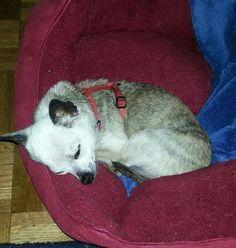 Tita asleep!  August 2014