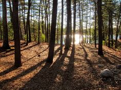 Henry David Thoreau's beloved slice of exquisite nature still exists today in the form of a Walden Pond State Reservation.